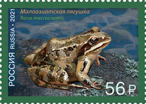 Asiatic grass frog