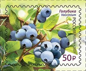 Flora of Russia. Berries