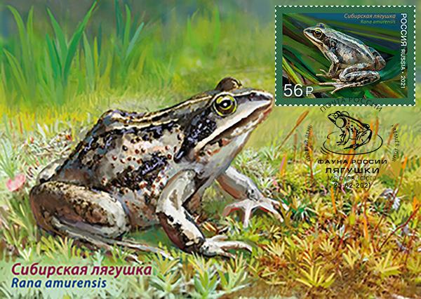 Siberian wood frog