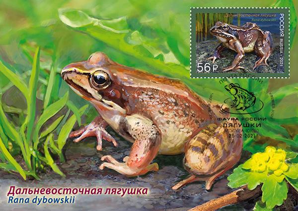 Iranian long-legged wood frog